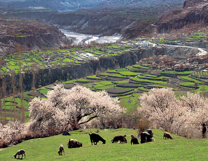 Blossom Tour to Hunza Valley, Pakistan
