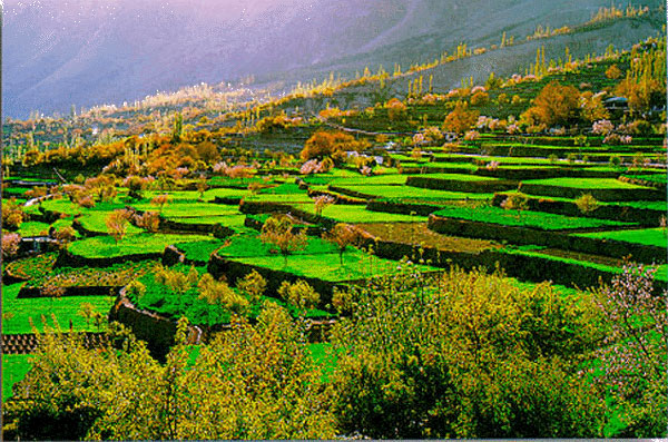 Cherry Blossom Tour to Hunza Valley