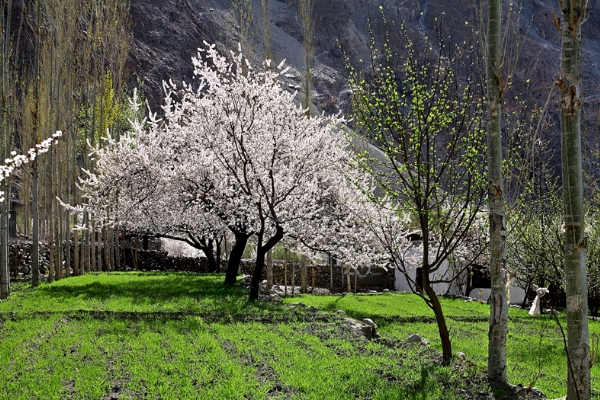 Colors of Hunza Valley, Pakistan